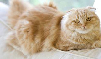 Getting A Cat Insurance