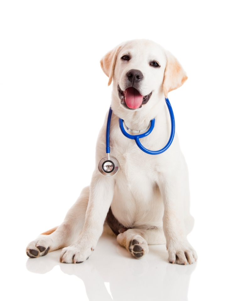 dog insurance and procure