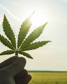 Good benefits of cannabis you never knew